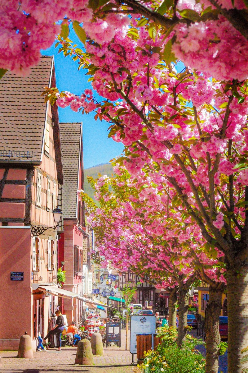 Photos of Spring in Alsace - Kaysersberg © French Moments