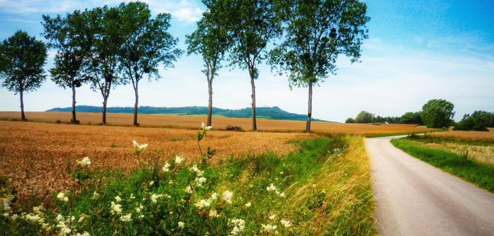 The French Countryside: A Discovery Guide