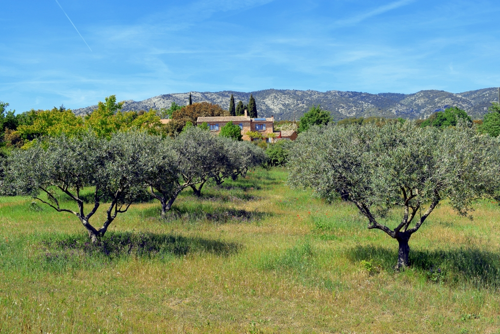 Bédoin, Provence © French Moments