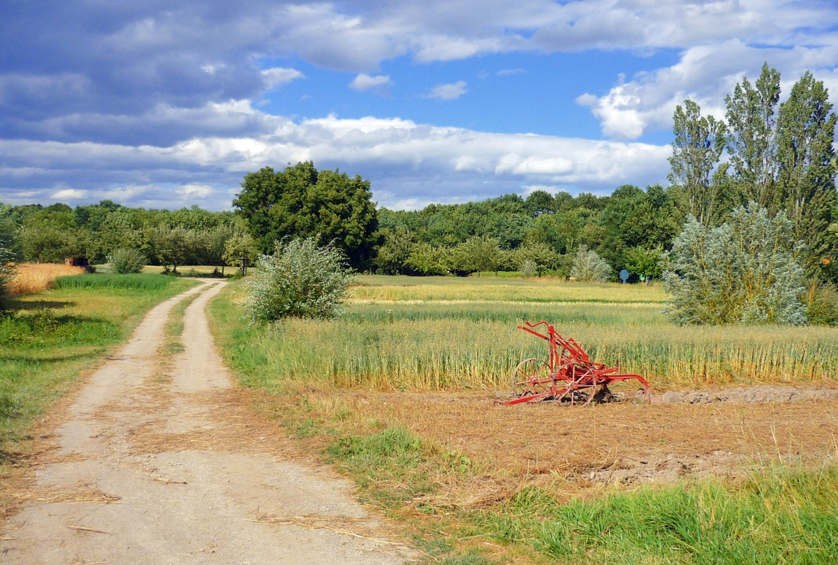Field at the Ecomusée d'Alsace © French Moments