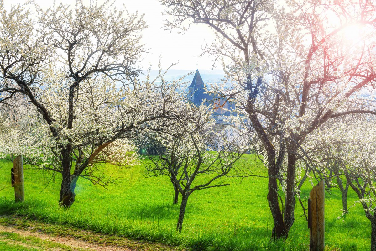 French Countryside: Spring in Lorraine (Toulois) © French Moments