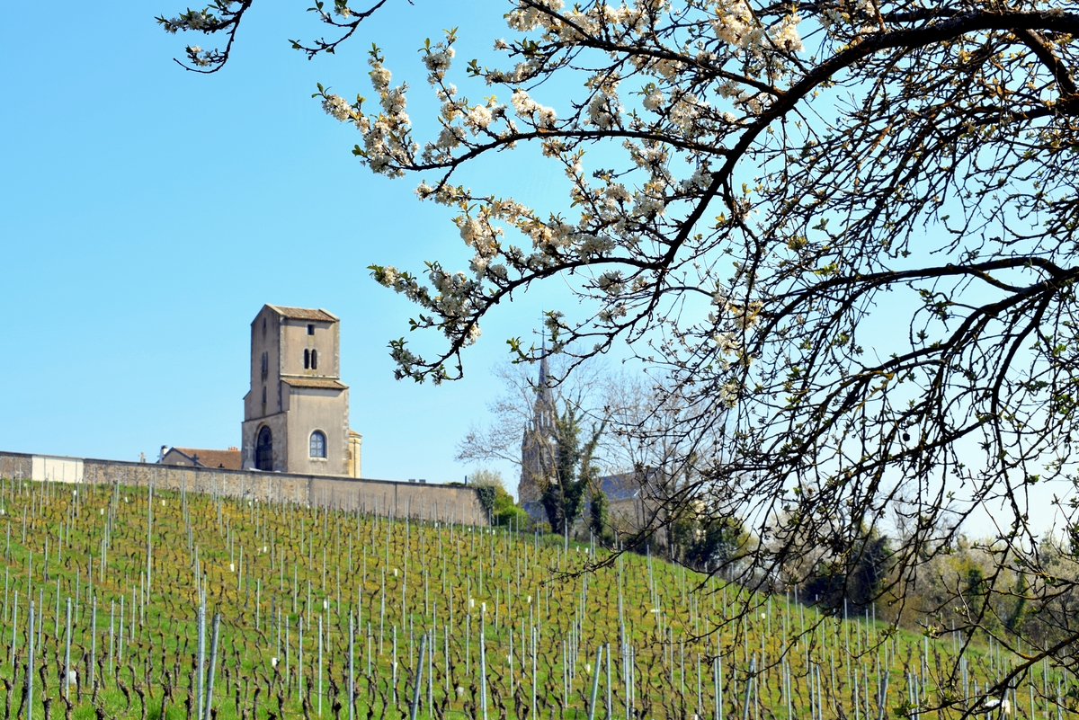 Photos of Spring in Lorraine - Toulois © French Moments