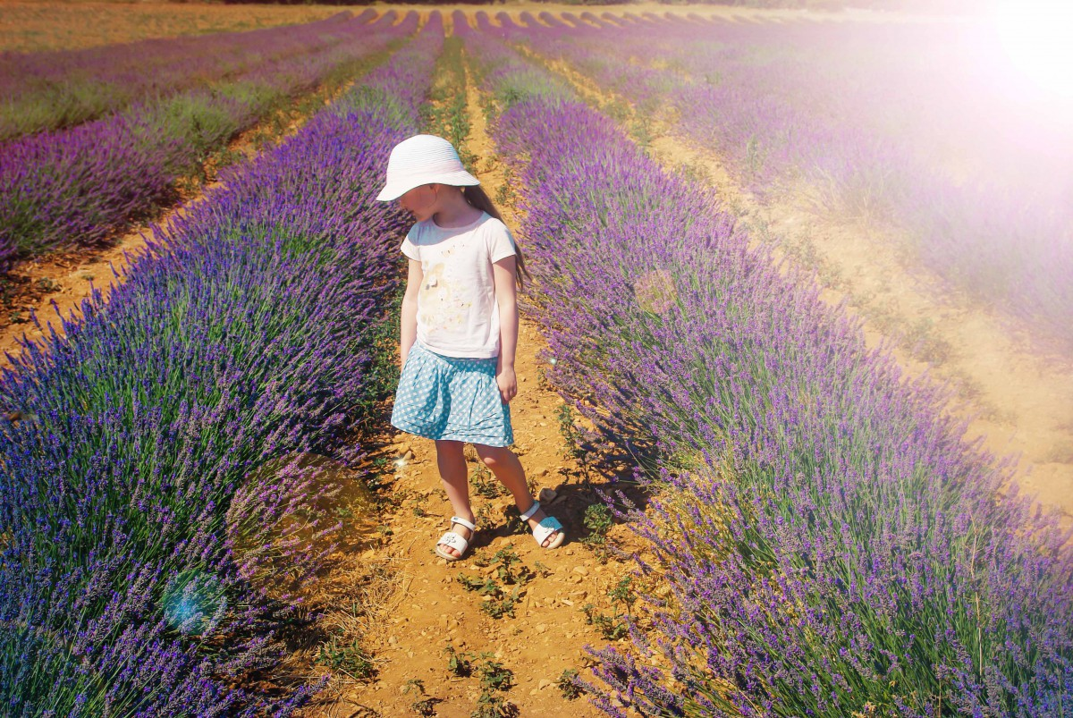 French countryside: Lavender Field in Provence © French Moments