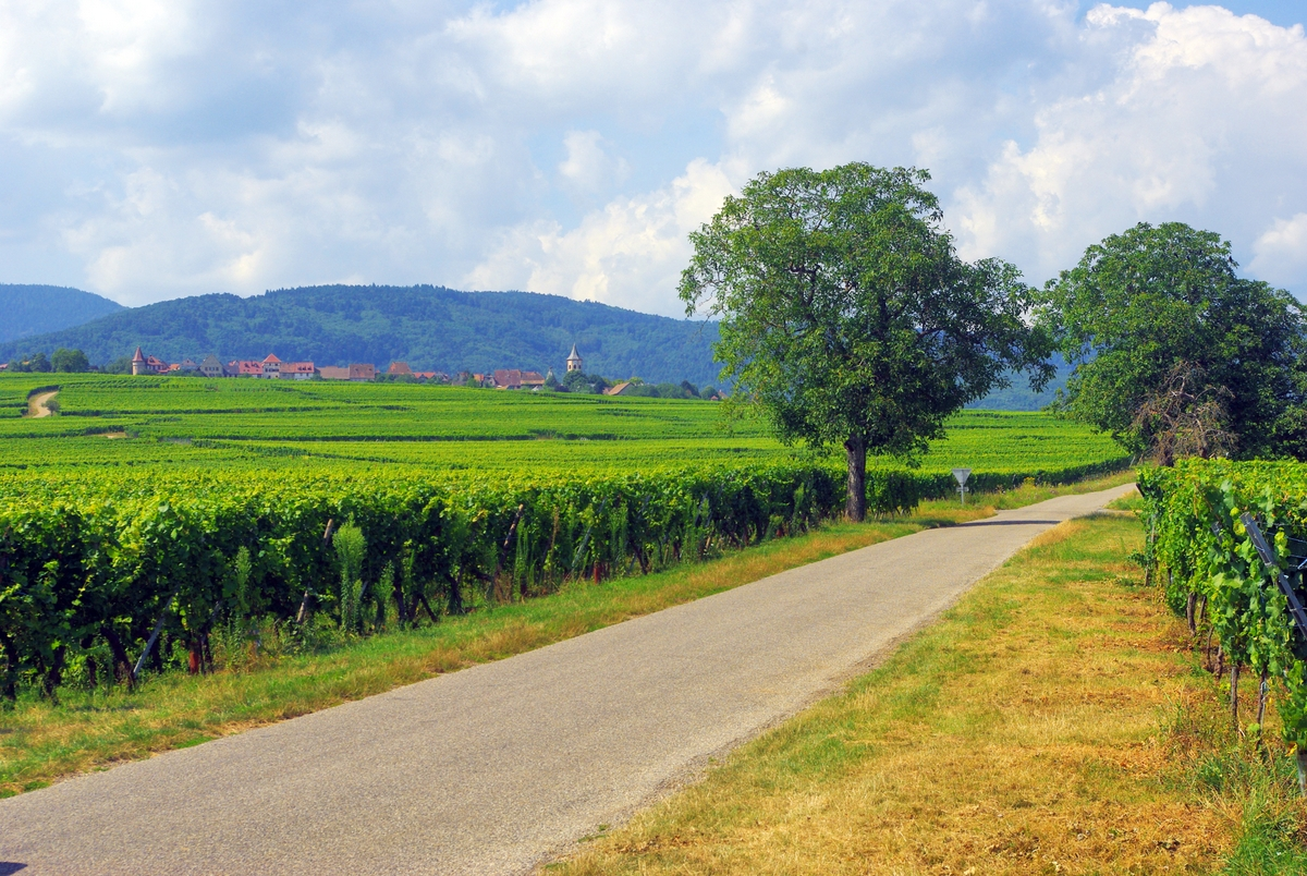 The Alsace vineyards near Zellenberg © French Moments