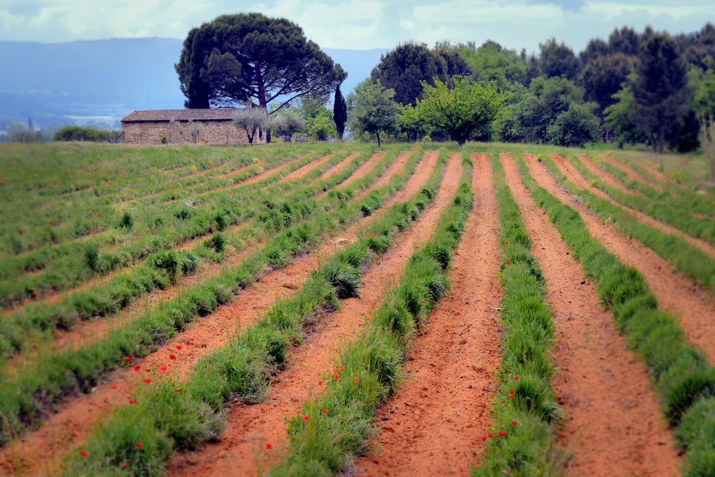 Mormoiron, Provence © French Moments