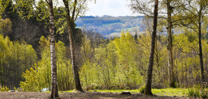 Wilderness Wood © French Moments