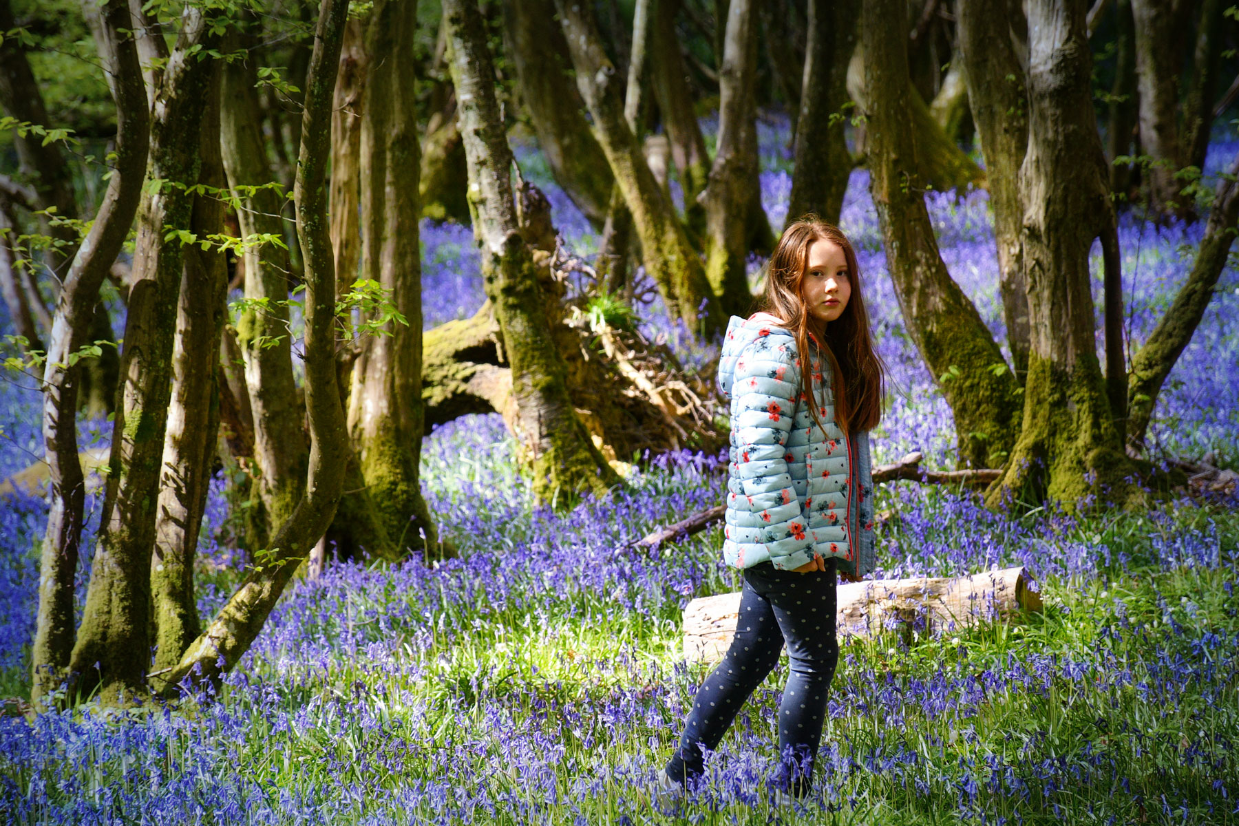 Walking in the bluebells © French Moments