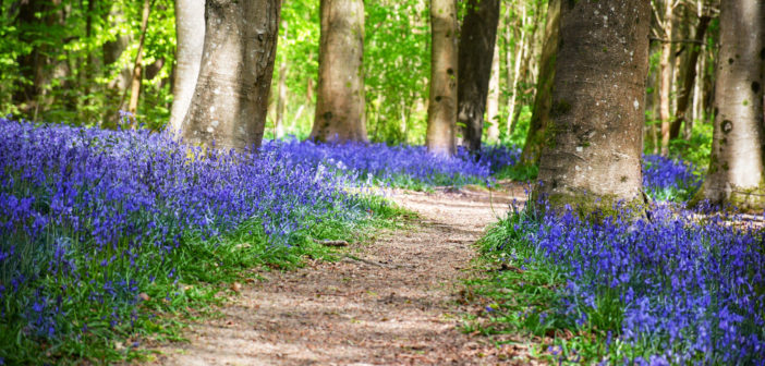 Brede High Woods © French Moments